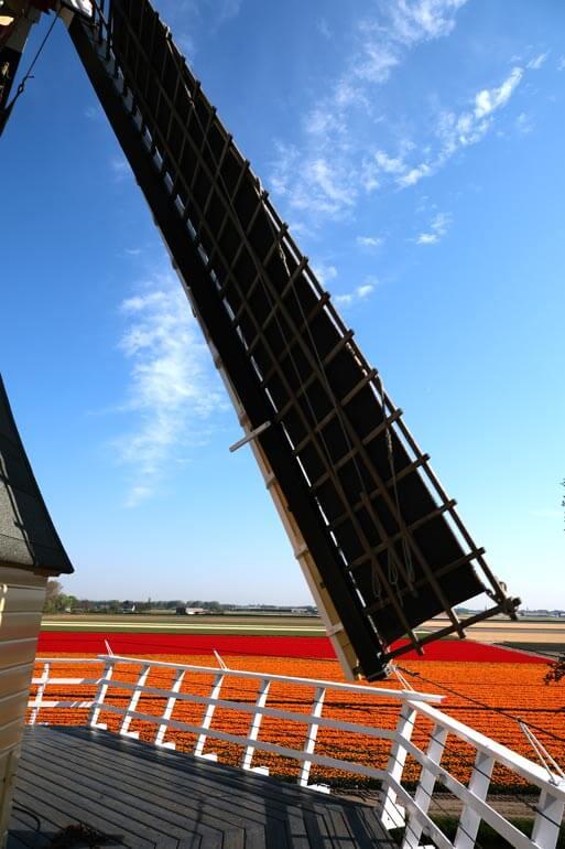 View from Keukenhof's windmill