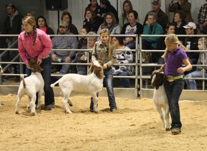 Friday Stock Show 11