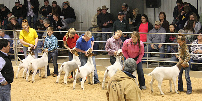 Friday Stock Show 13