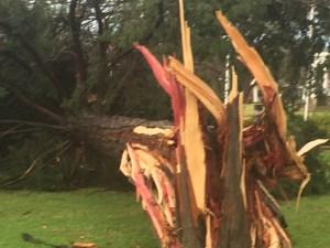 March 8 Storm Damage 44