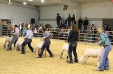 Stock Show (day 2) IMG_0742