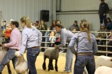 Stock Show (day 2) Luke Weber has a good grip on his lamb as the students wait for the judges to decide