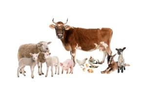 On why eating meat is bad for the environment