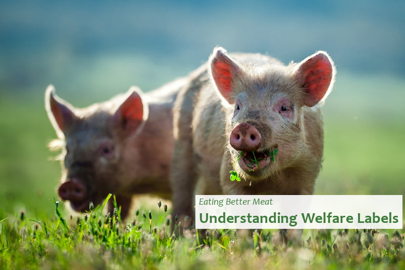 Eating Better Meat - Understanding Welfare Labels
