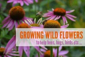 Growing Wild Flowers