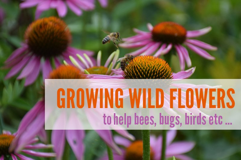 Growing Wild Flowers