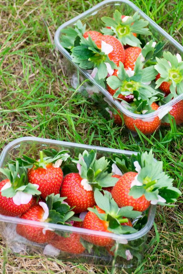 English Strawberry Punnets