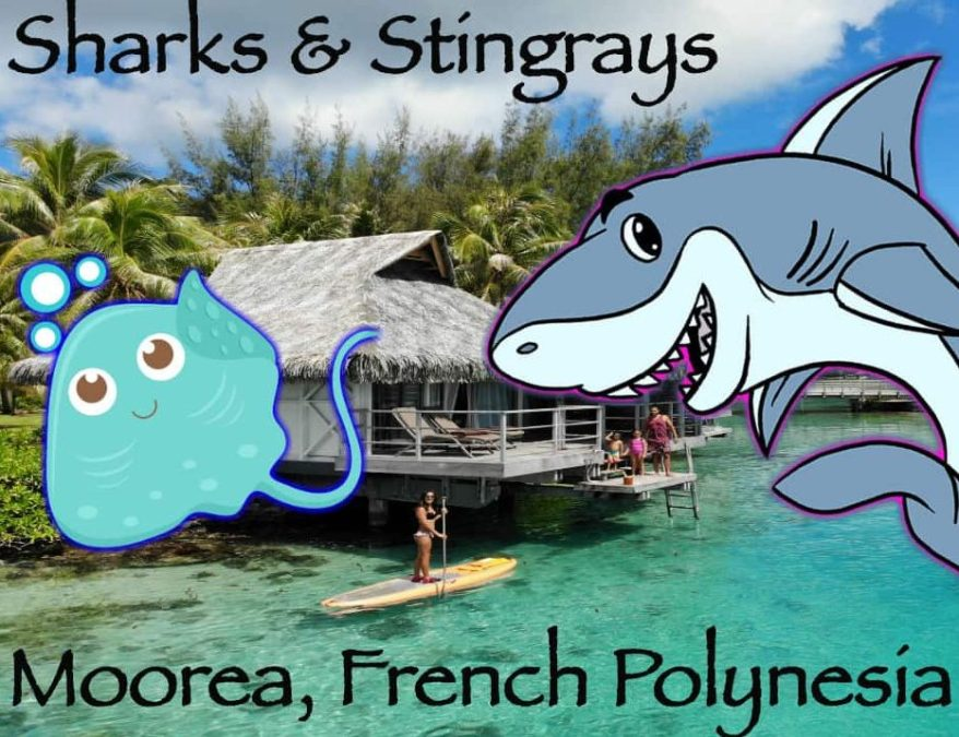 Swimming with Sharks & Stingrays in French Polynesia