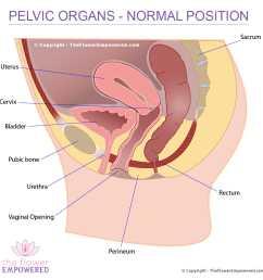 pelvic organ prolapse normal placement of organs [ 1024 x 1024 Pixel ]