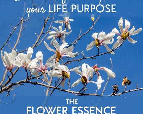 FEP01 Life Purpose