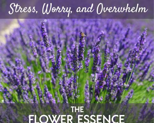 FEP02 Stress, Worry and Overwhelm