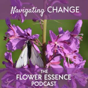 flower essence for change