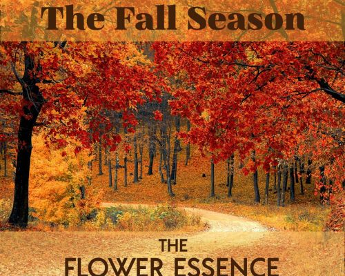 FEP08 The Fall Season