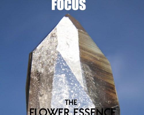 FEP09 Focus