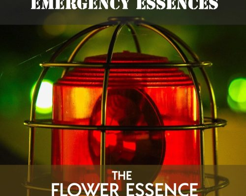 FEP12 Emergency Essences for Crisis