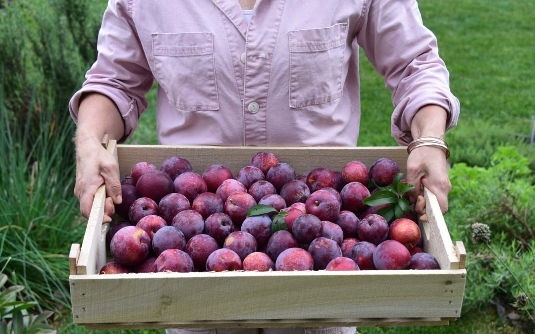 Preserving Our Harvest