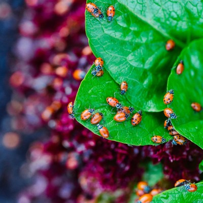 How To Keep Your Garden Pest Free Without Using Pesticides
