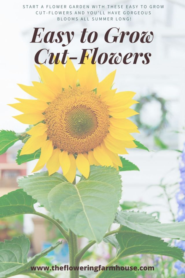 cut flowers to grow