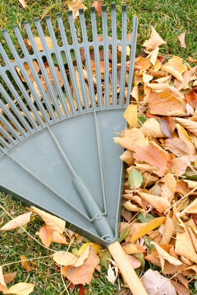 prepare your garden for winter by cleaning up leaves