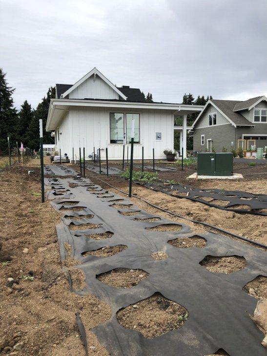 garden ready for planting dahlia tubers