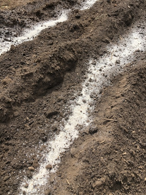 bone meal mixed into soil
