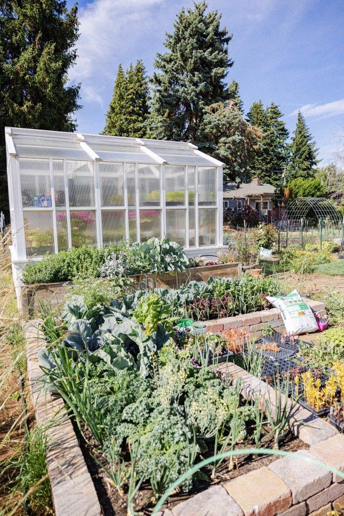 Vegetable Garden growing