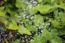 Raindrops on spider's web ©SJA