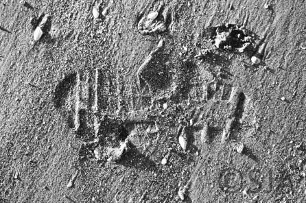 footprint-paw-print-black-and-white