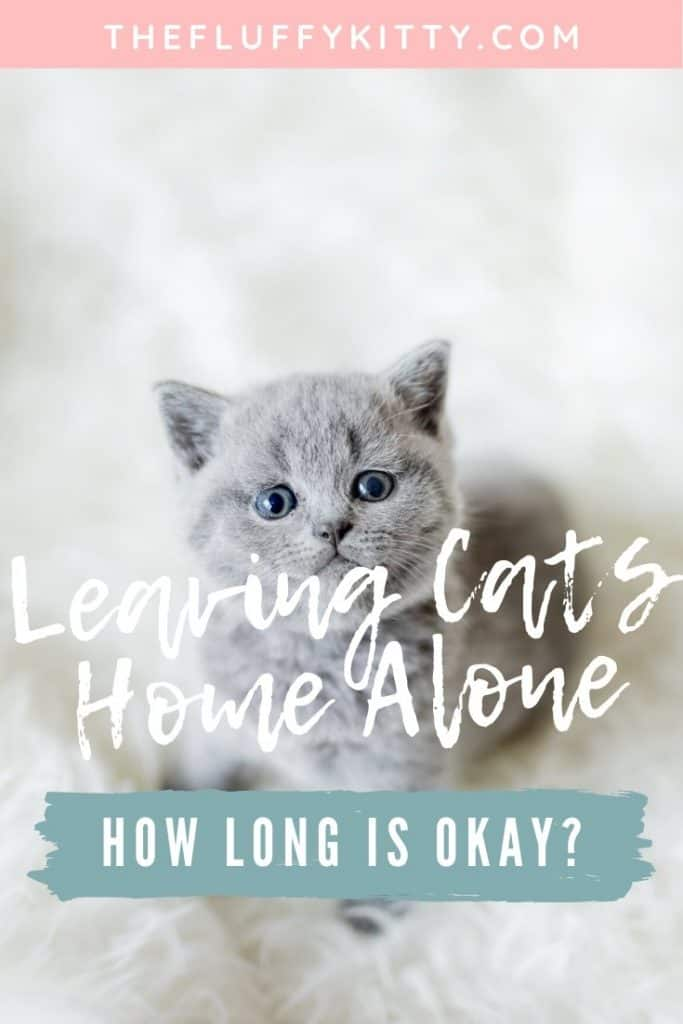 How Long Can You Leave A Cat At Home While On Vacation Fluffy Kitty