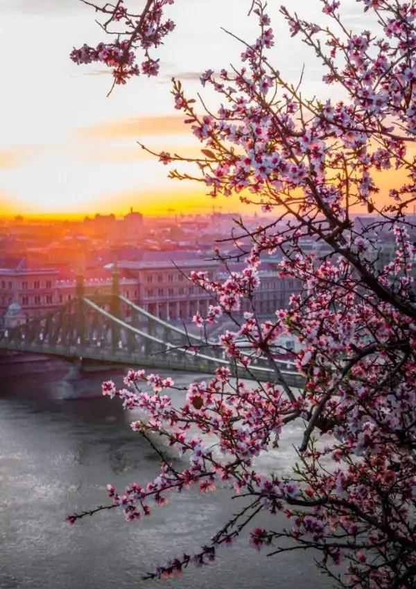 Budapest on a Budget