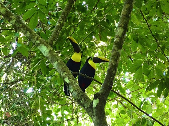 theflyingsnails-costarica-corcovado-1