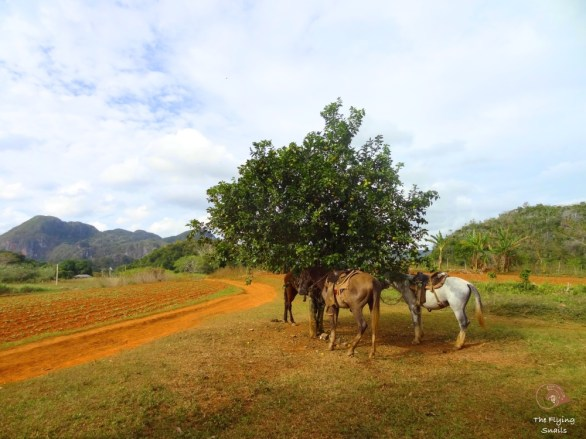 the valle of Viñales