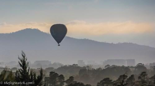 Balloon over the Arboretum