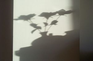 Shadow of Flower Vase