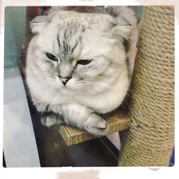 cat attic myeondong