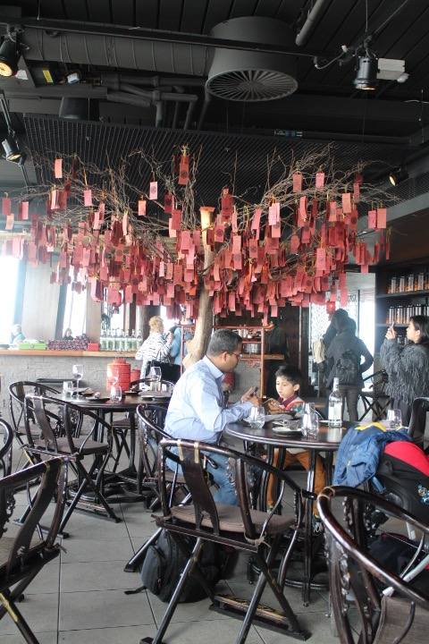 hutong_tree
