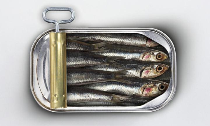 November 24: National Sardines Day