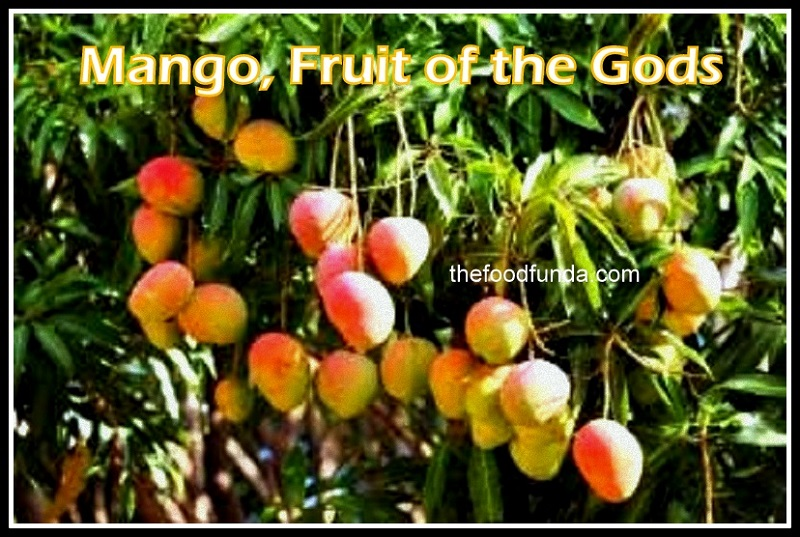 Mango, Fruit of the Gods