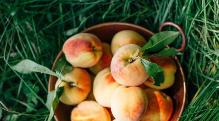 In Search of Nova Scotia Peaches