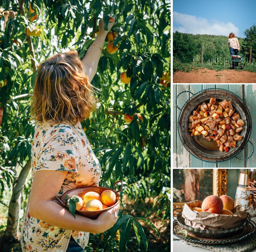 Peach Orchard 5