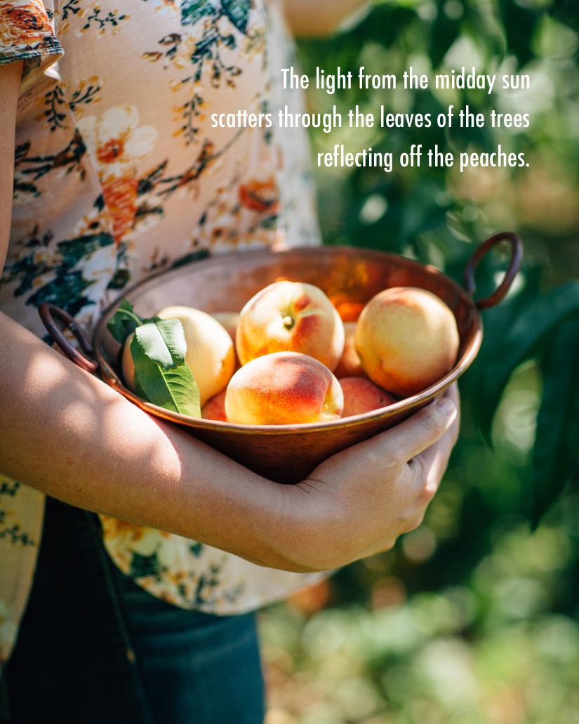 Peach Orchard 7