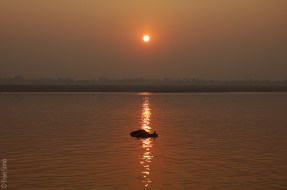 Vaca muerta flotando en el Ganges.