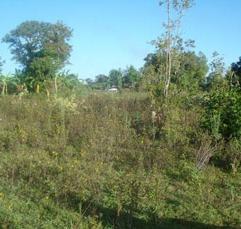 New Land Rangala, Kenya