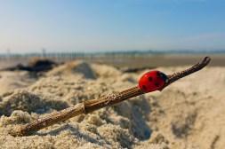 ladybird on wittering beach