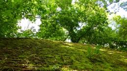 part of the landscape
