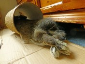 that is one very relaxed rabbit!