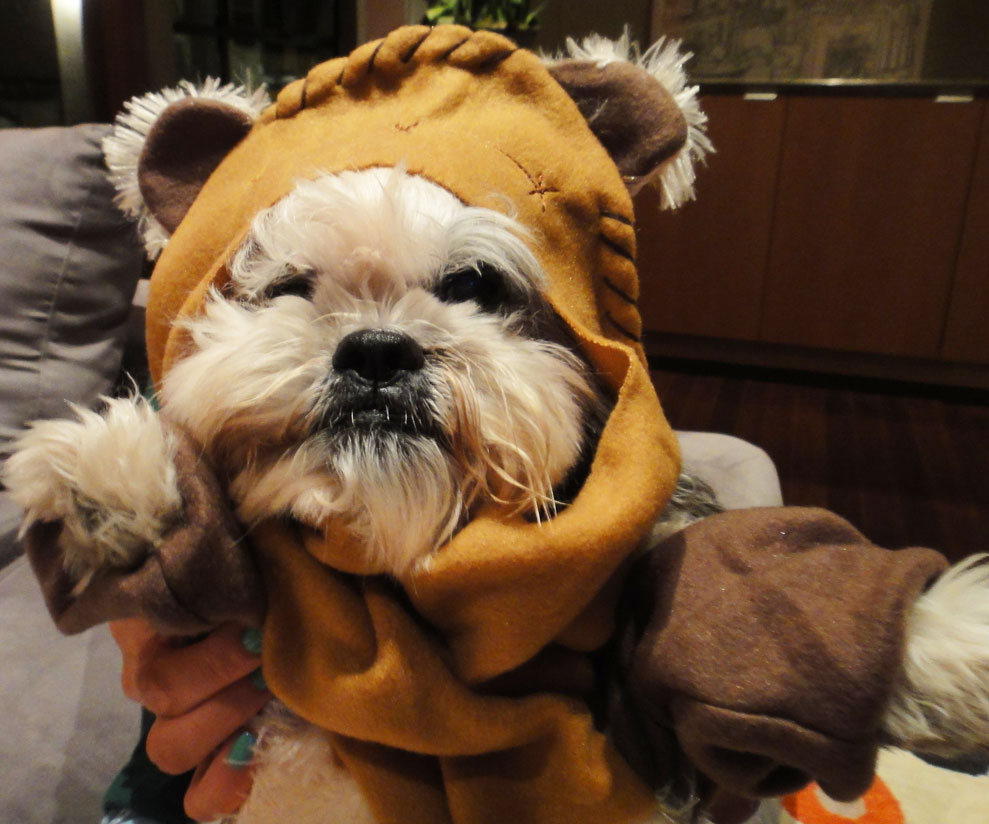 Woof! New Force Awakens toys for dogs