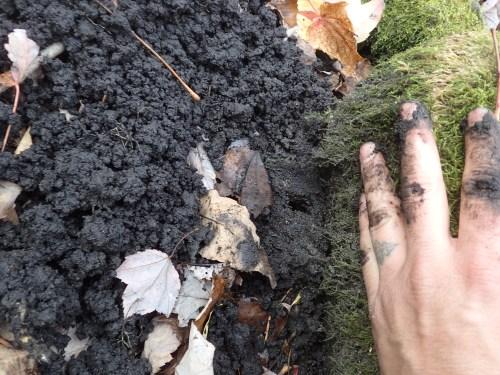 Mole hill uncovered, Star-nosed mole