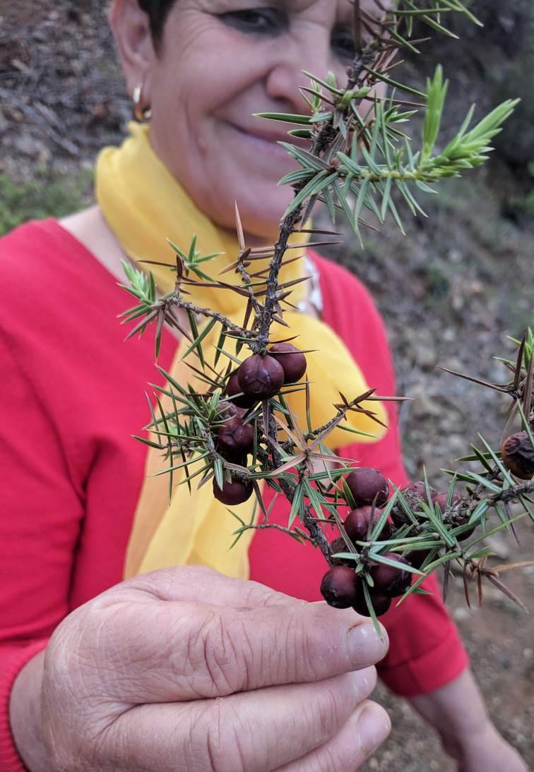 albania-plant-2
