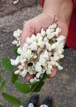 albania wild plants